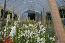and new efforts, like florist supply hoop houses.